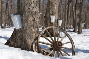 maple-syrup-1169896_640