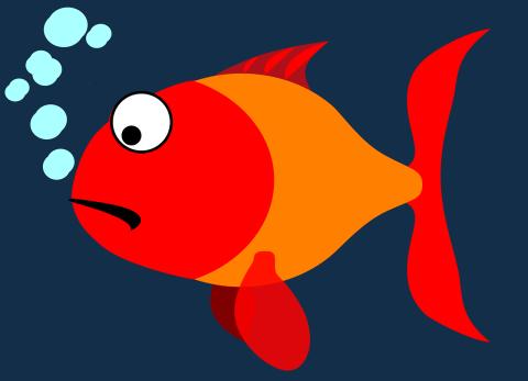 fish-304786_1280
